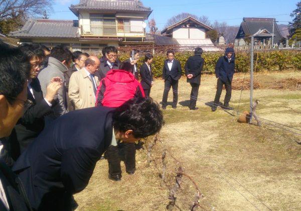 その後訪れた「見本ブドウ園」では美味しいワインを栽培するために間引いた枝を持ち帰る事ができました。